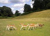 Hirsch Knowles Deer Park