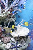 stock photo of mosk  - Model of a tropical reef in museum - JPG
