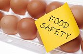 picture of safety  - Eggs Can Carry Salmonella Food Safety Concept Concept with Brown Egg and Yellow Note - JPG
