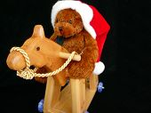 stock photo of horse wearing santa hat  - Teddy wearing a Santa hat riding his horsey on black isolated background - JPG