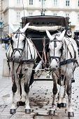foto of blinders  - Fiaker Horses - JPG