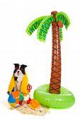 Retrato de um cão de férias numa praia tropical