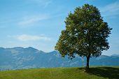 Single Foliage Tree And Green Meadow