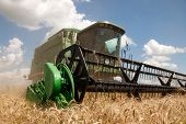 pic of combine  - Combine harvests wheat on a field in sunny summer day - JPG