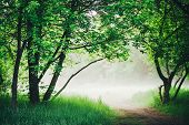 Scenic Landscape With Beautiful Lush Green Foliage. Footpath Under Trees In Park In Early Morning In poster