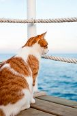 Lonely Red Cat Looking Away Sitting And Waiting On Harbor Of Mediterranean Sea Coastline. View From  poster