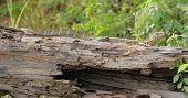 Lizard In Uganda
