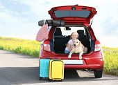 Cute Little Girl And Her Dog In Open Car Trunk Outdoors. Space For Text poster