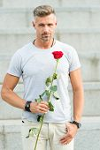 Happy Birthday. Bearded Man Holding Fresh Natural Birthday Gift. Handsome Man With Red Rose For Birt poster