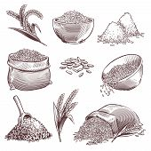 Sketch Rice. Vintage Hand Drawn Asian Grains And Ear. Pile Of Wild Rice Cereals, Paddy Sack. Agricul poster