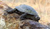 Turtle On A Log