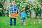 Professional Gardener At Work. Gardener Cutting Flowers In His Garden. Farm Family. Grandfather With poster