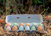 One Dozen Unwashed Colorful Chicken Eggs In Open Cartonon Dried Grass Viewed From Above- Free-range  poster