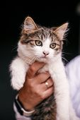 Hands Holding Cute Tabby Kitten With Sweet Looking Eyes . Adorable Homeless Kitty With Funny Emotion poster