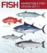 Marketable fish image design set 1. Vector illustration.