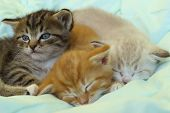 Pets, Animals, Family, Animals Day Concept. Cute Playful Kittens.  Colorful Kittens Indoors. poster