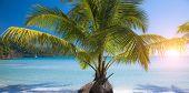 Palm tree on summer beach. Exotic vacation scene.