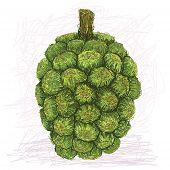 Pandanus Fruit