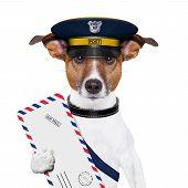 Perro de correo