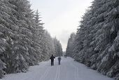 Skiing In A Snowy Winter Forest