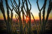 Desert sunset through cactus tree over Phoenix,AZ