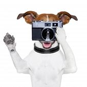stock photo of toy dogs  - dog taking a photo with an old camera - JPG