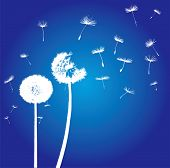 silhouettes of dandelions in the wind on blue background