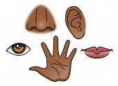 5 Senses