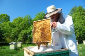stock photo of beehive  - Beekeeper working in his apiary in the summer - JPG