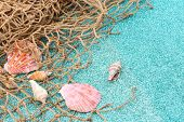 Sea shells and fish net