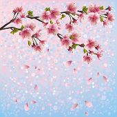 Colorful Spring Background With Sakura Blossom - Japanese Cherry Tree