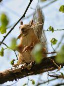 Ridiculous Squirrel