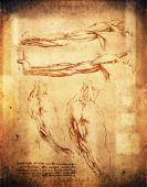 image of leonardo da vinci  - old leonardo da vinci style arms illustration - JPG