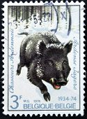 a stamp printed in the Belgium shows Wild Boar Regimental Emblem