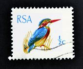 A stamp printed in South Africa (RSA) shows African Pygmy Kingfisher - Ispidina picta