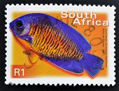 A stamp printed in RSA shows coral beauty centropyge bispinosus
