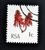 A stamp printed in Republic of South Africa shows image of a red plant sprig