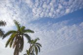 Coconut Trees With Sunny Blue Sky poster