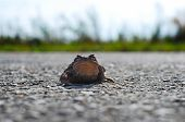 Frog Toad On The Road
