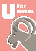 U For The Urial, An Animal Alphabet For The Kids