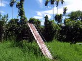 Rusted Slide In Overgrown Grass