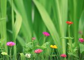 Small beautiful flowers in the garden over green grass background.