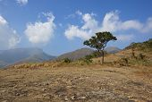 foto of tamil  - a lone tree on the top of a hilly landscape in the kodaikanal region of tamil nadu south india under a blue sky with fluffy clouds - JPG