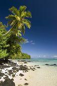 Palm tree above sandy and rocky beach. Site of Survivor Cook Islands, Aitutaki