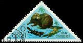 Vintage  Postage Stamp. Beaver.