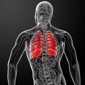 picture of inflamed  - 3d rendered illustration of lung back view - JPG