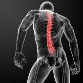 3d render Human Spine Anatomy