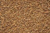 Spice seeds of cumin.