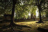 Buddha Statue With Tree Frame (ayuthaya, Thailand)