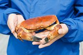 picture of cooked blue crab  - Closeup of man hands holding cooked crab - JPG